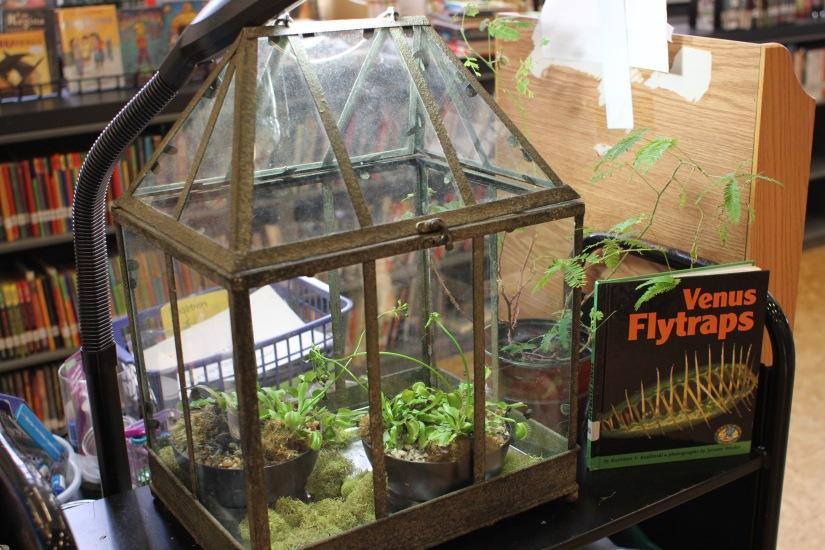 venus fly traps